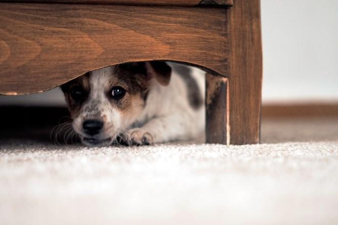 Poskrbimo, da december ne bo preveč stresen za naše hišne ljubljenčke.