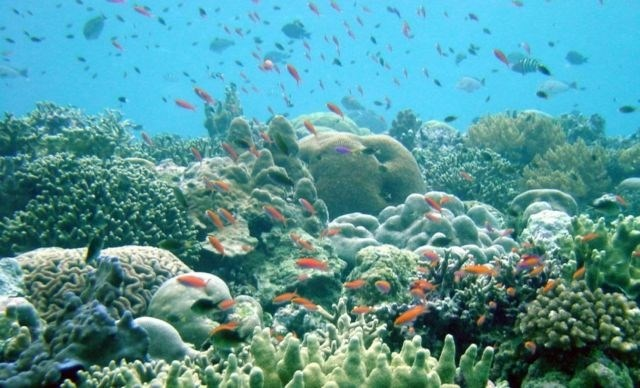 (Foto: ARC COE for Coral Reef Studies/Marine Photobank/Reuters)