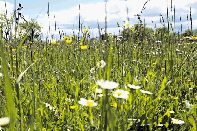 Izginjanje travniških rož in insektov: vetrobranska stekla brez mrčesa