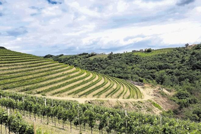 V Goriških Brdih slovenski obiskovalci napolnili vse turistične nastanitve