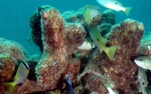 Bi tridimenzionalno tiskanje lahko preprečilo popolno izginotje koralnih grebenov?