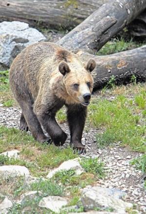 Imejmo radi vse živali, ne le medvede in volkove