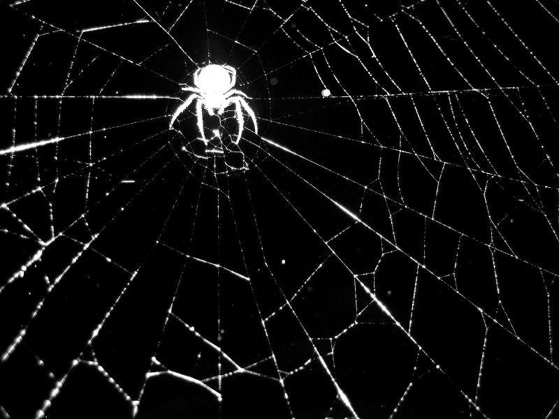 Protein v strupu avstralskega pajka bi lahko zmanjšal poškodbe po možganski kapi