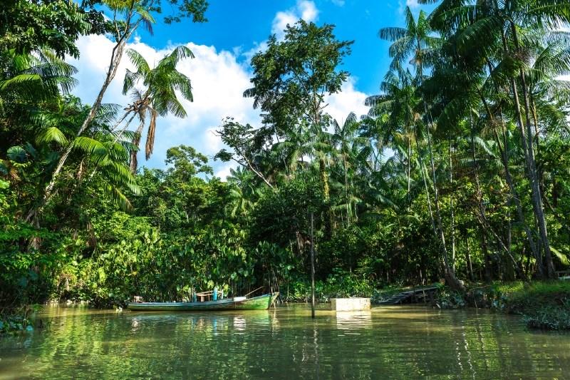 Alarmantno: tropski gozdovi so velik vir ogljikovih izpustov