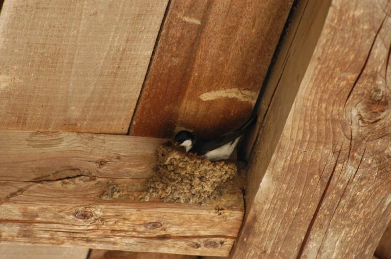 S prenavljanjem stavb nekaterim živalim uničujemo dom