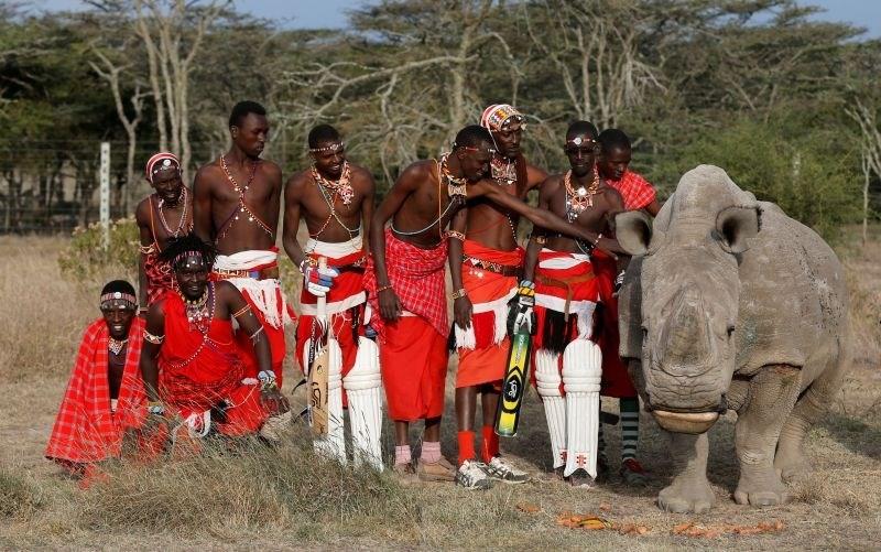 #foto #video Poginil je še zadnji severni beli nosorog