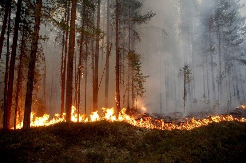 #foto Na Švedskem se borijo s številnimi požari v naravi