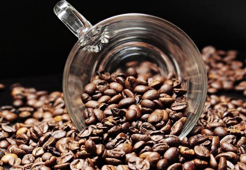 Na rdečem seznamu ogroženih vrst se je znašla kava