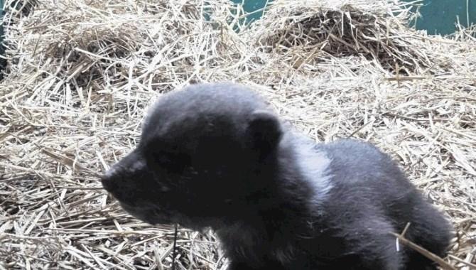 Medvedek Matija končal v živalskem vrtu