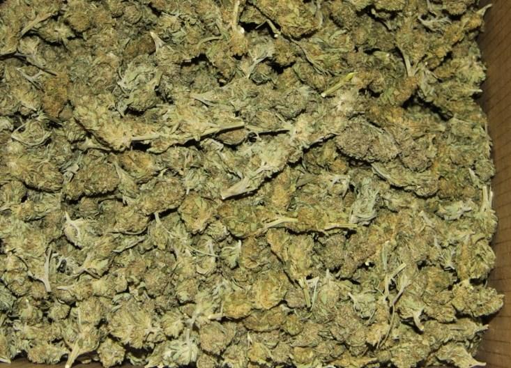 V hišnih preiskavah v preteklih dneh zasegli večjo količino prepovedanih drog