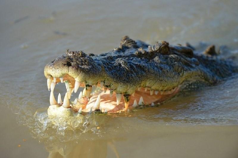 #video Na gladino reke se je dvignil krokodil s truplom pogrešanega moškega v gobcu