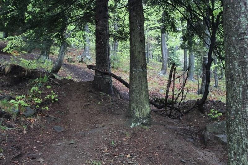 #foto Na srečo nihče ni umrl: med drevesa na pohorski divji kolesarski progi napeli bodečo žico