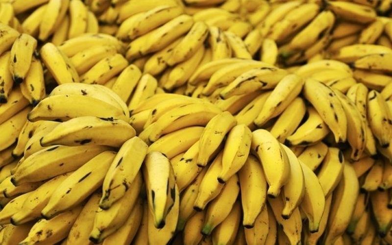 Glive bi lahko uničile svetovni izvoz banan