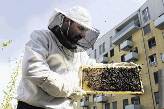 Čebelarjenje odslej tudi prek aplikacije navidezne resničnosti