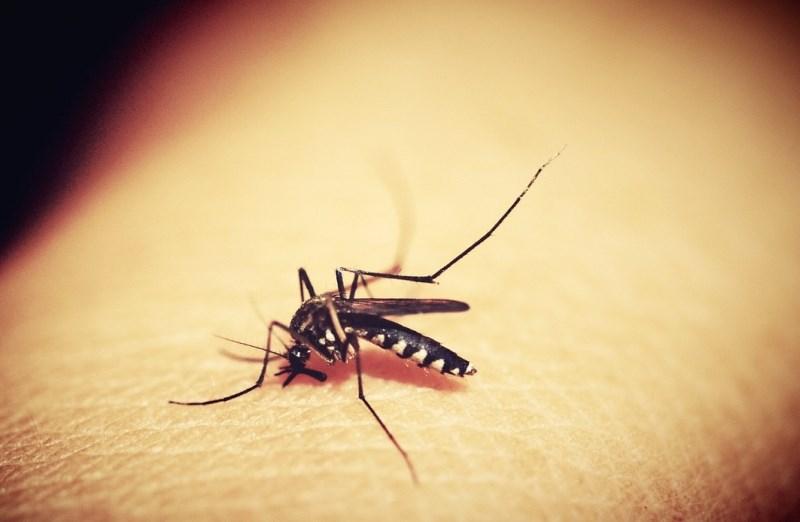 Kenija uvedla cepivo proti malariji