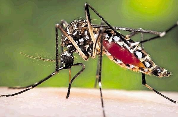 Za skrivnostne bolezni ameriških in kanadskih diplomatov na Kubi naj bi bili krivi pesticidi proti komarjem
