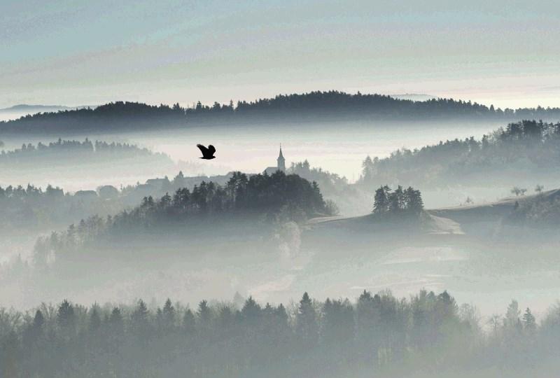 Nadškofija do 22 milijonov evrov zaradi polžjega vračanja gozdov