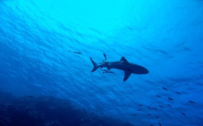 V gobcu kitovca našli novo vrsto rakov