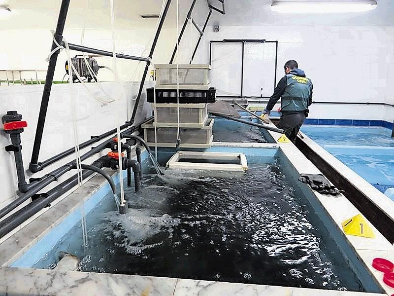 Letos zasegli pet ton steklenih jegulj, vrednih 11,5 milijona evrov