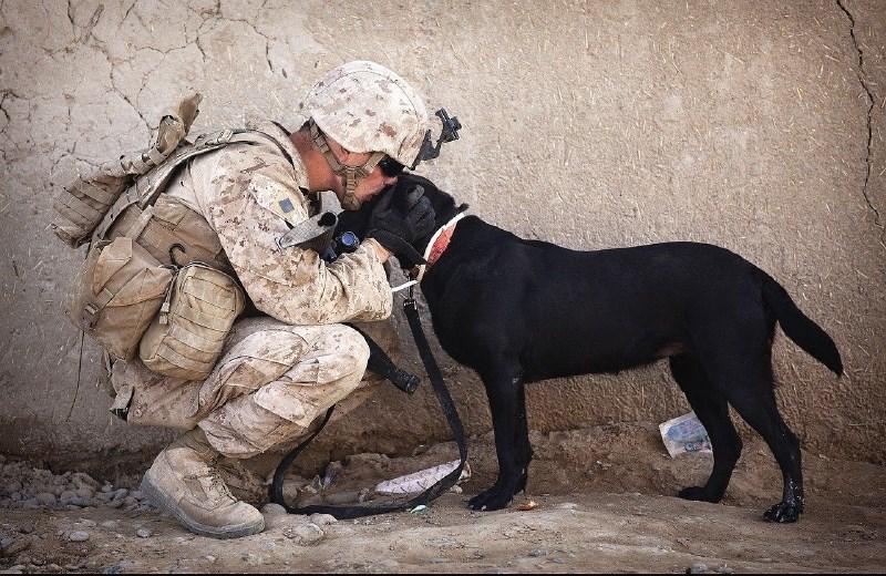 V Avstriji vojaška psa domnevno ubila vojaka