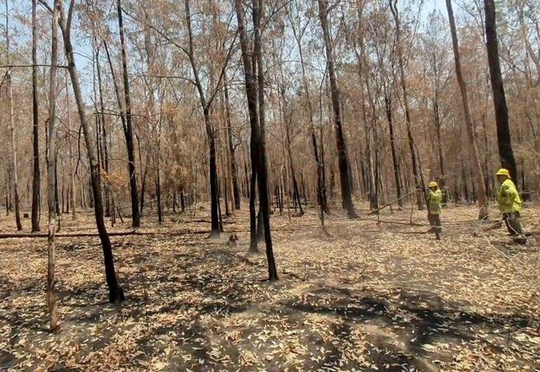 Dež na območja požarov v Avstraliji prinesel nekaj olajšanja