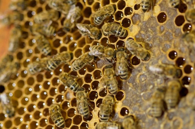 Stroka poziva k izboljšanju usposobljenosti čebelarjev