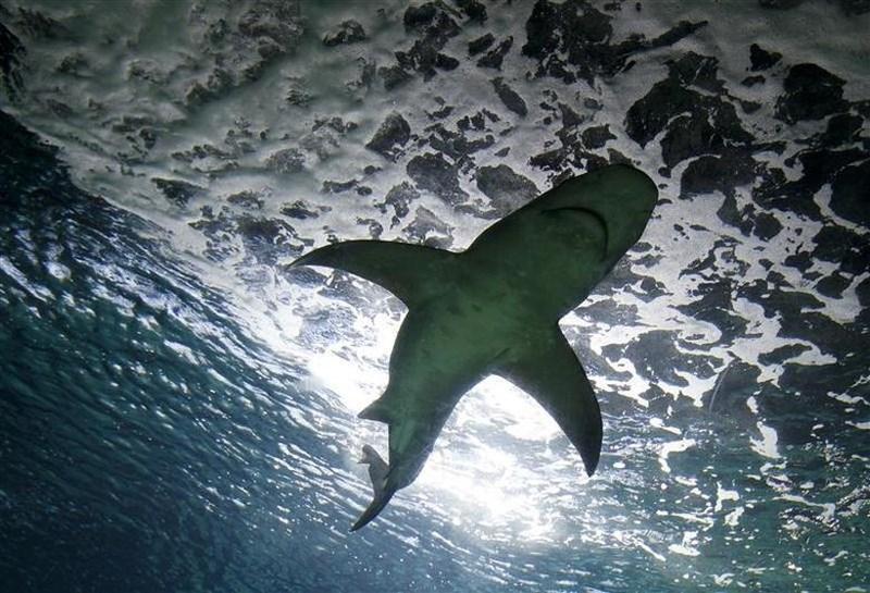 Moški po napadu morskega psa podlegel poškodbam