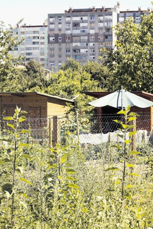 Najdaljša vrsta za vrtičke v Štepanjskem naselju