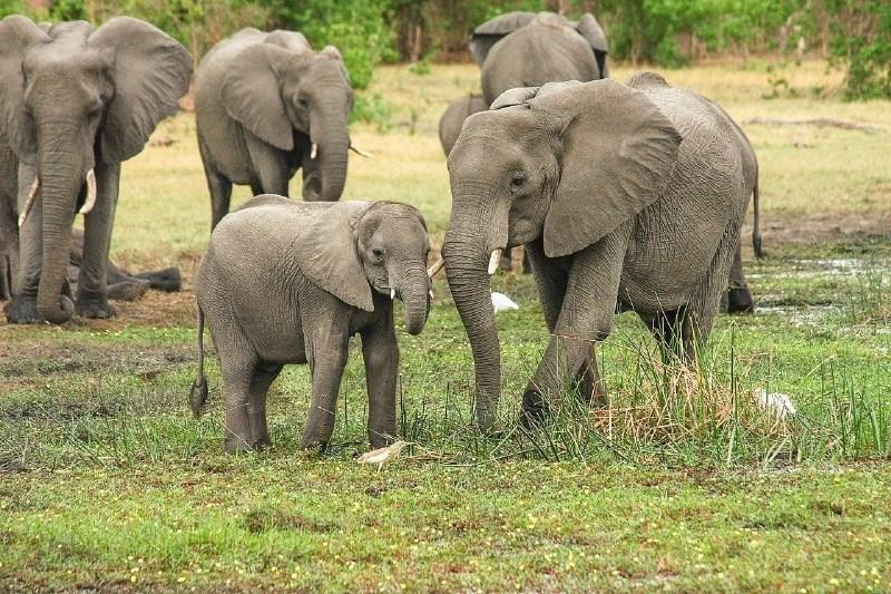 Strela ubila čredo 18 indijskih slonov